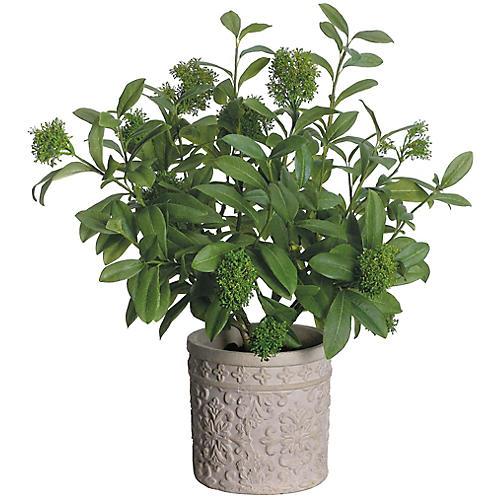 """30"""" Skimmia Plant, Faux"""