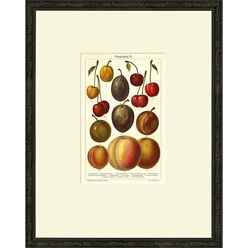 Stone Fruit, Obstsorten