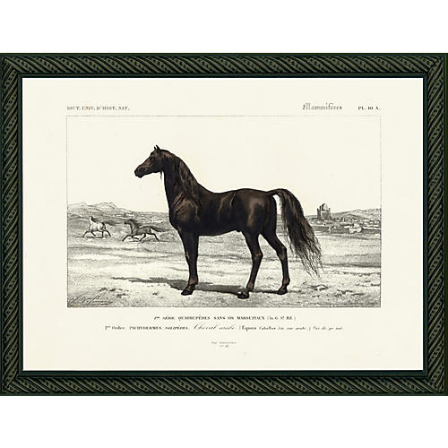 Horse, 1849