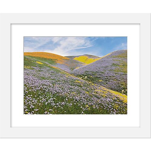 Kevin Russ, California Wildflowers