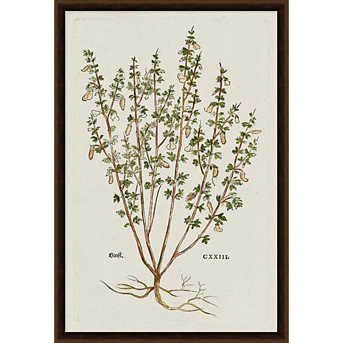 vintage botanical prints | One Kings Lane