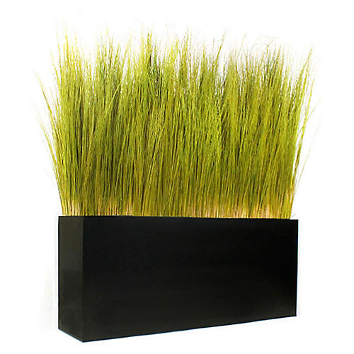 "52"" Spiral Grass w/ Box Planter, Preserved"