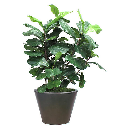 "36"" Fiddle-Leaf Fig w/ Tapered Planter, Faux"