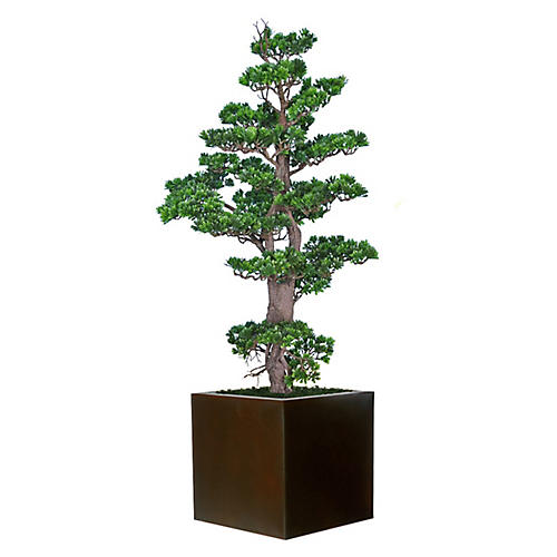 "54"" Bonsai w/ Cube Planter, Faux"