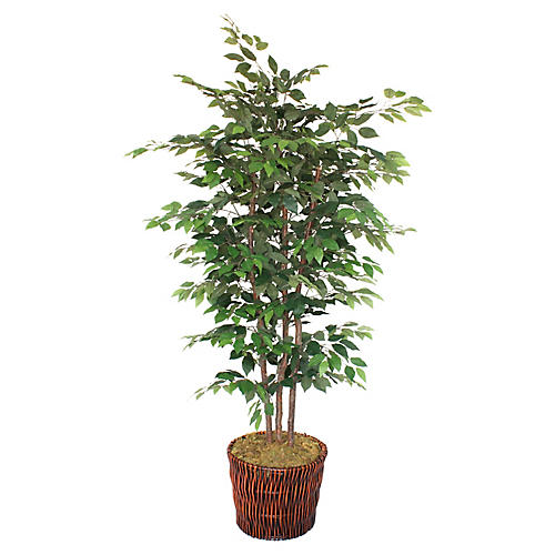"90"" Ficus Tree w/ Planter, Faux"