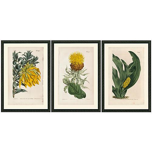 Smith & Co., Yellow Botanicals