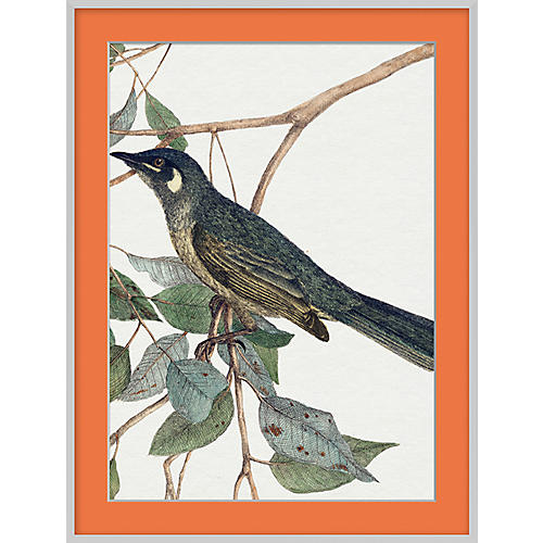 Orange Bird III