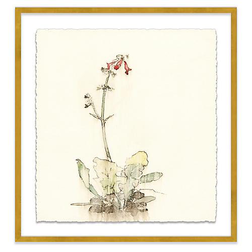 Mary H. Case, Botanical II