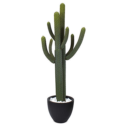 "70"" Thorny Cactus w/ Pot, Faux"