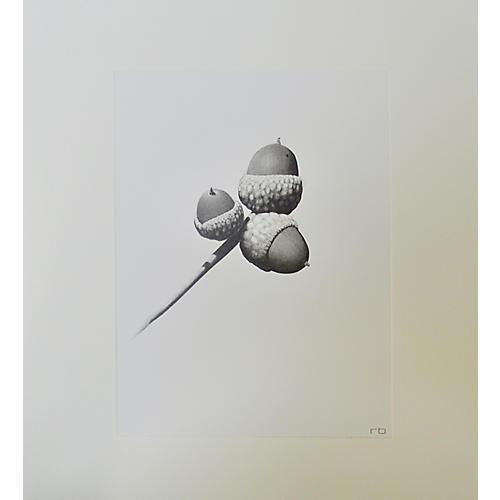 Richard Bowers, Acorn Study