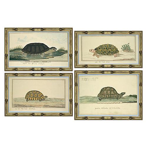 S/4 Turtle Species