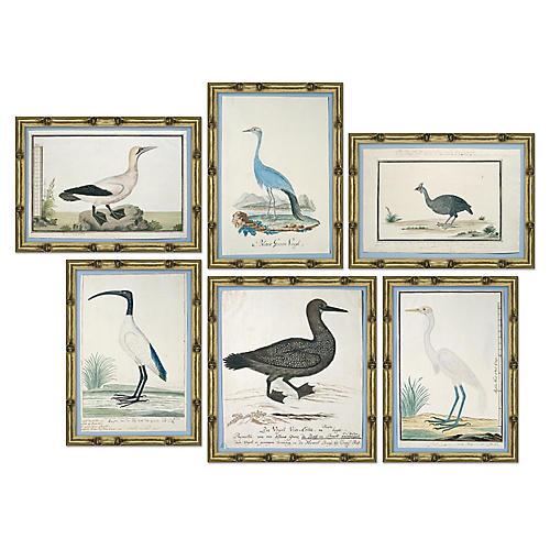 S/6 Bird Studies