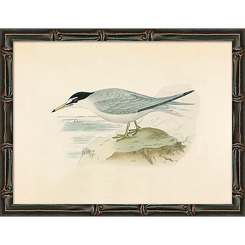 Sea Bird 2