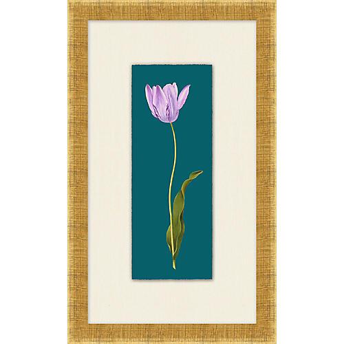 Lillian August, Royal Tulip III