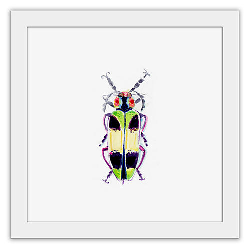 Cathy Graham, Mimosa Beetle