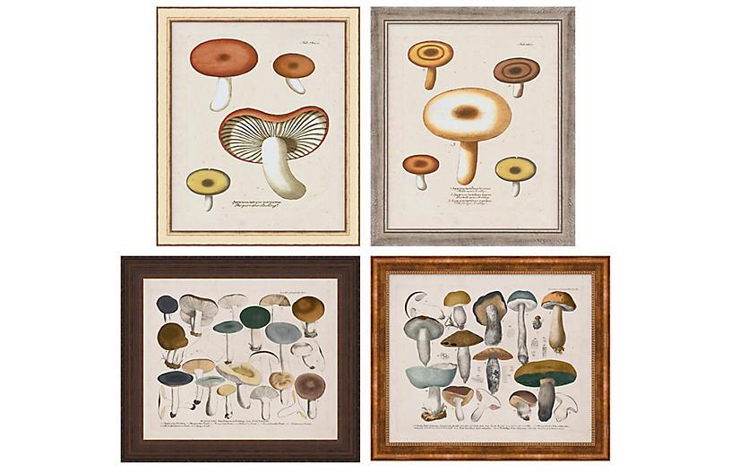 Lauren Liess, Mushroom Study Set