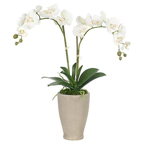 "23"" Phalaenopsis Orchid in Vase, Faux"