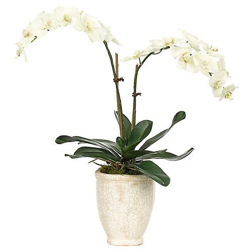 "25"" Phalaenopsis Orchid in Vase, Faux"