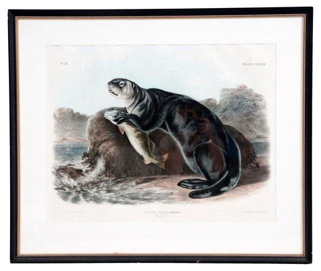 Framed Audubon Print, Sea Otter