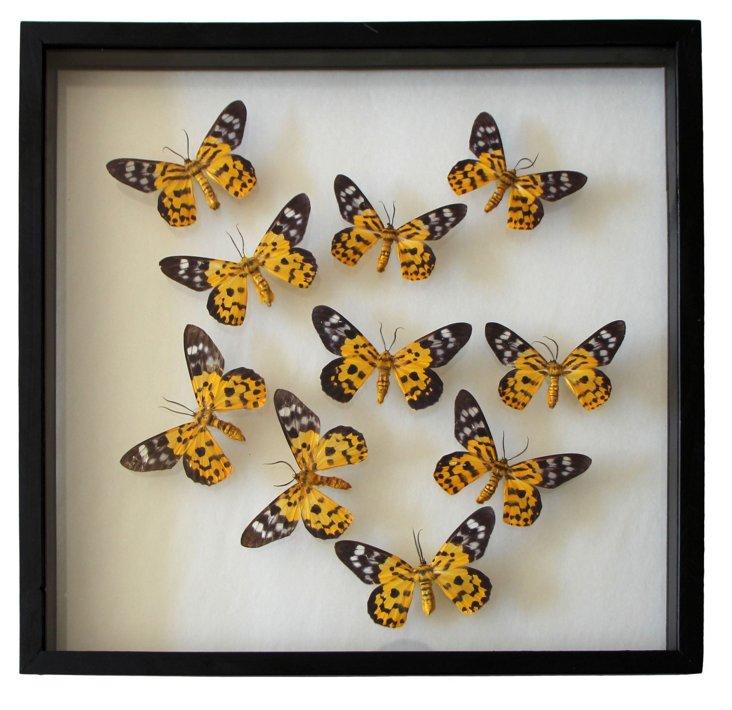 Butterfly in Frame III