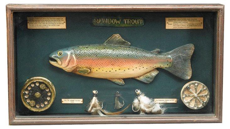 12x21 Rainbow Trout Shadowbox