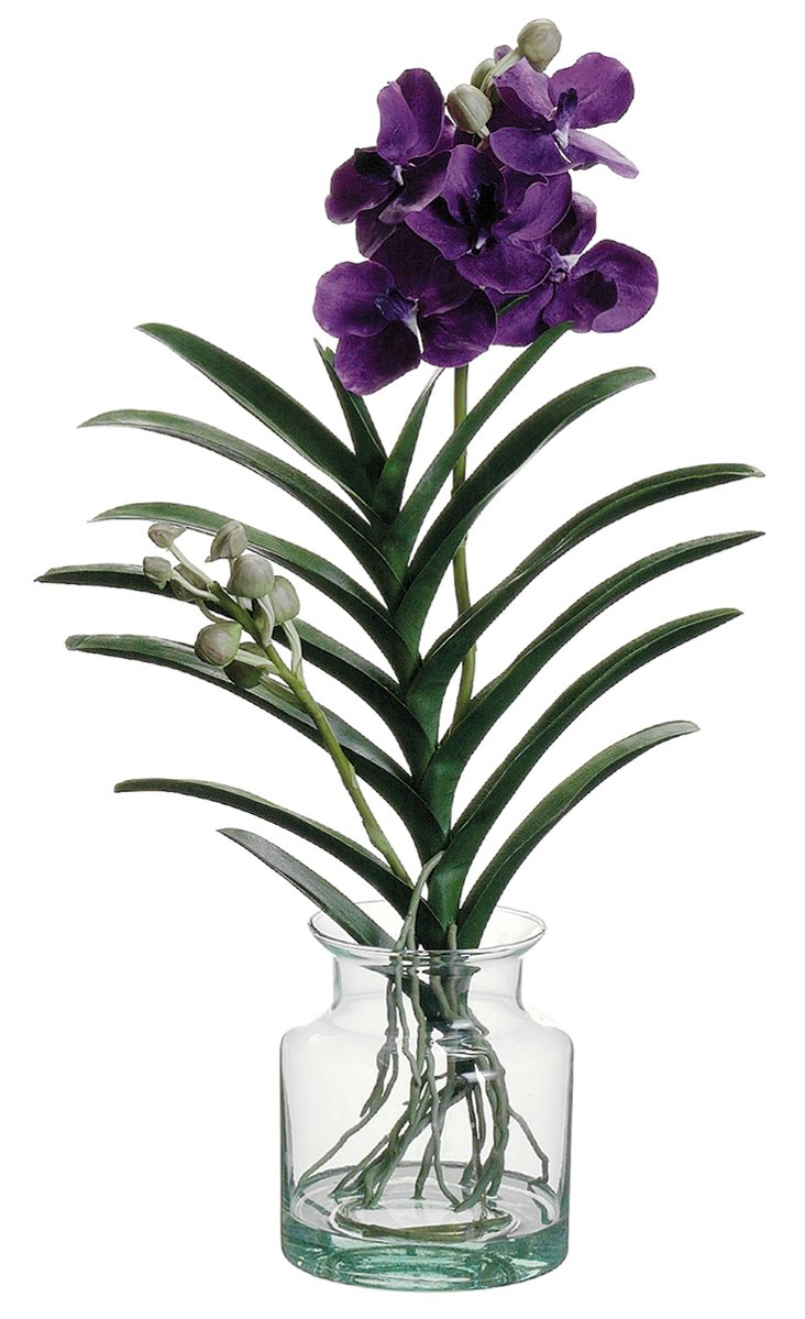 "25"" Vanda Orchid in Glass Vase, Faux"