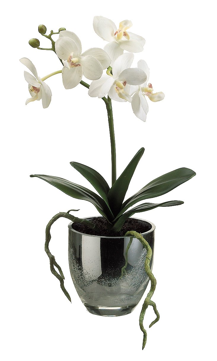 "14"" Phalaenopsis in Pot, Cream, Faux"
