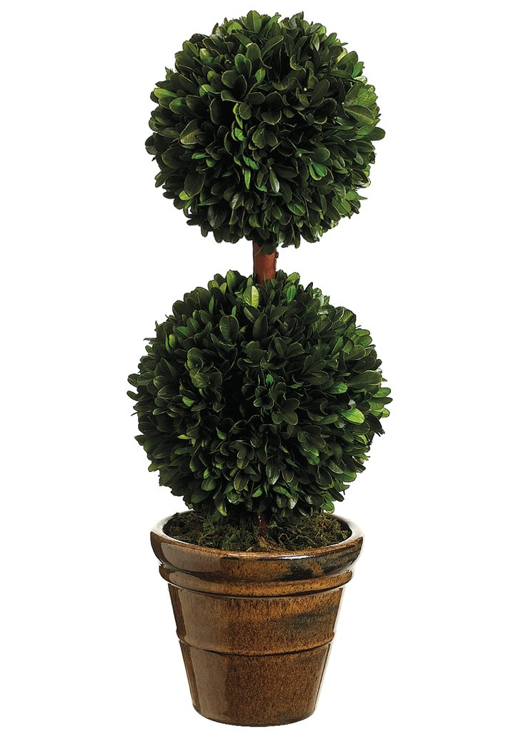 "19"" Boxwood Topiary, Preserved"