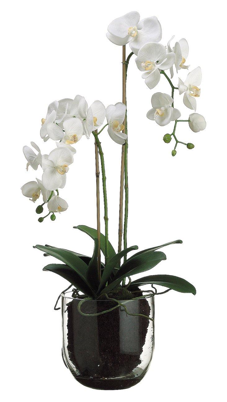 "32"" Phalaenopsis Plant in Vase, Faux"