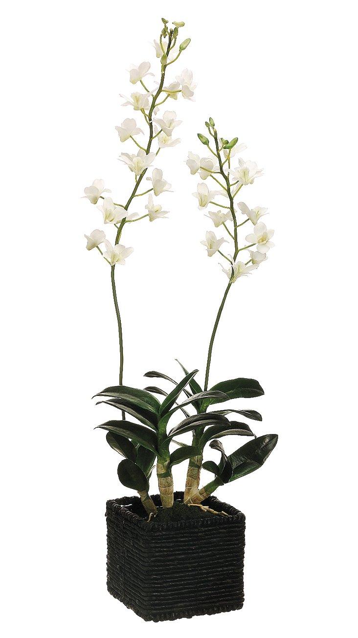 """30"""" Mini Dendrobium in Planter, Faux"""