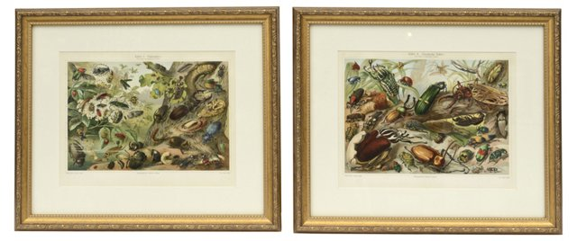 Beetles Prints, Pair