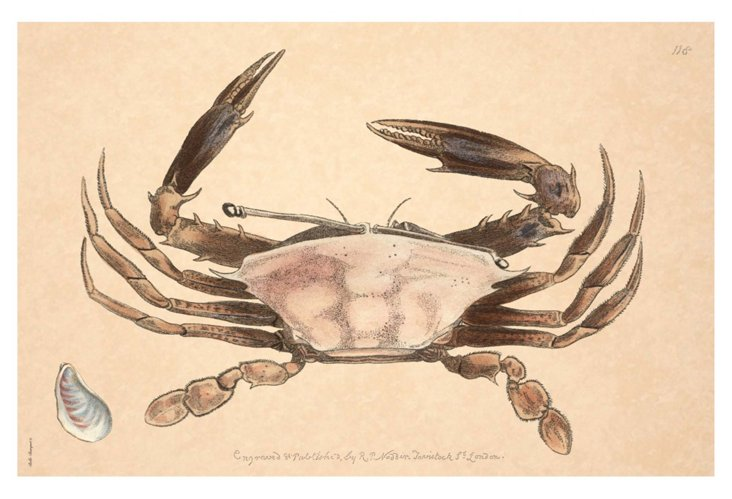 S/6 Mussel Crab Place Mats, Biege/Brown