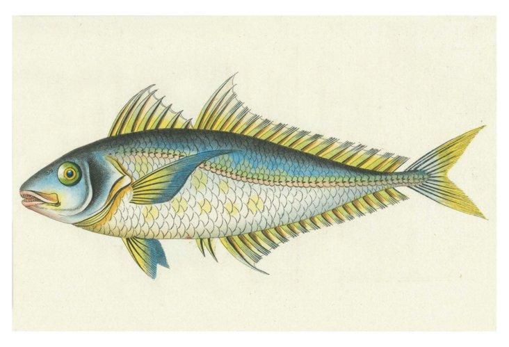 S/6 Bluefish Place Mats, Multi