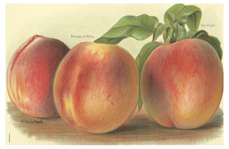 S/6 Peach Place Mats