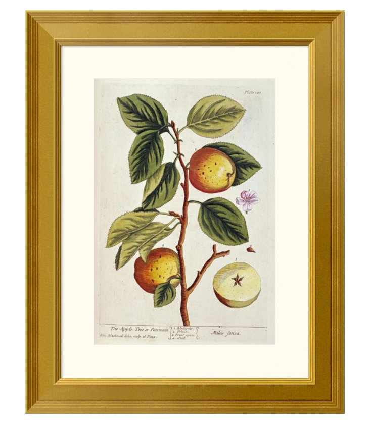 Elizabeth Blackwell, Apple Tree