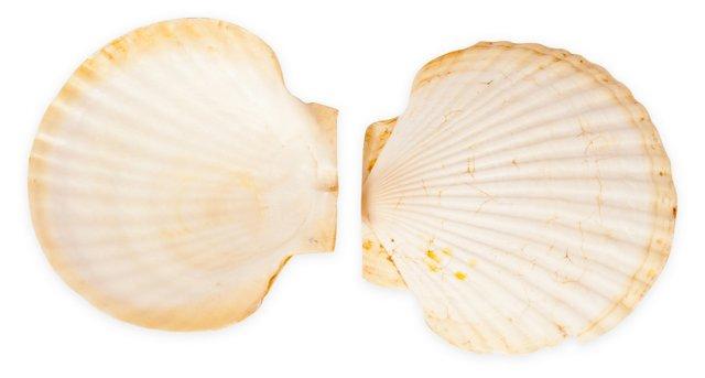 Seashells II, Set of 2
