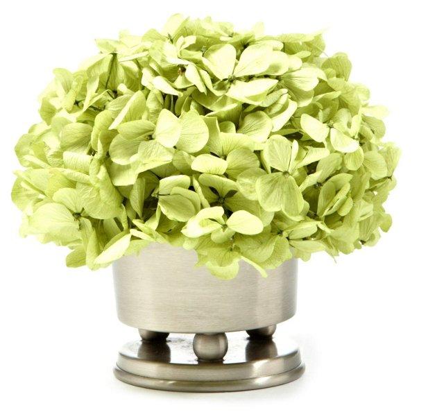 """7"""" Hydrangea Basil in Vase, Preserved"""