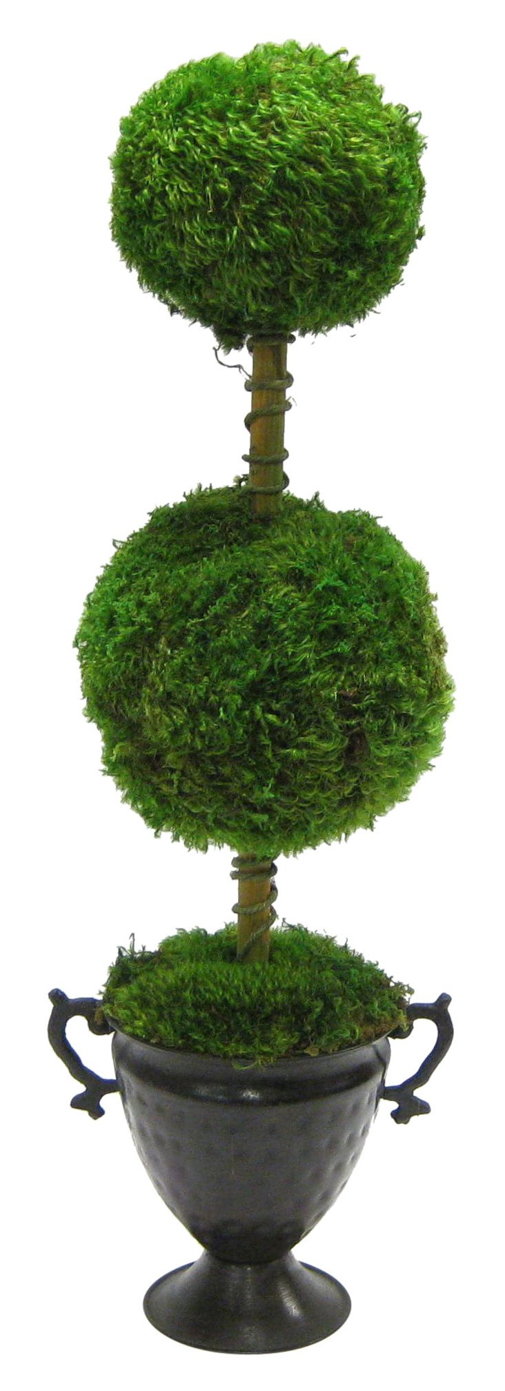 """26"""" Moss Topiary in Vase, Preserved"""