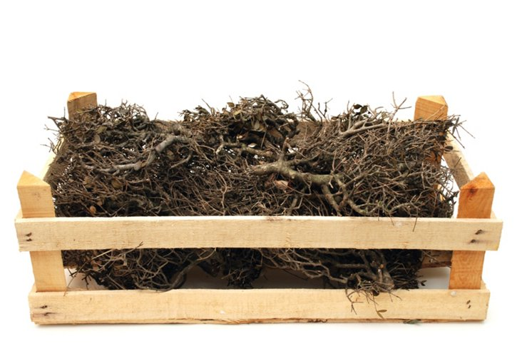 Pine Twigs in Wood Crate