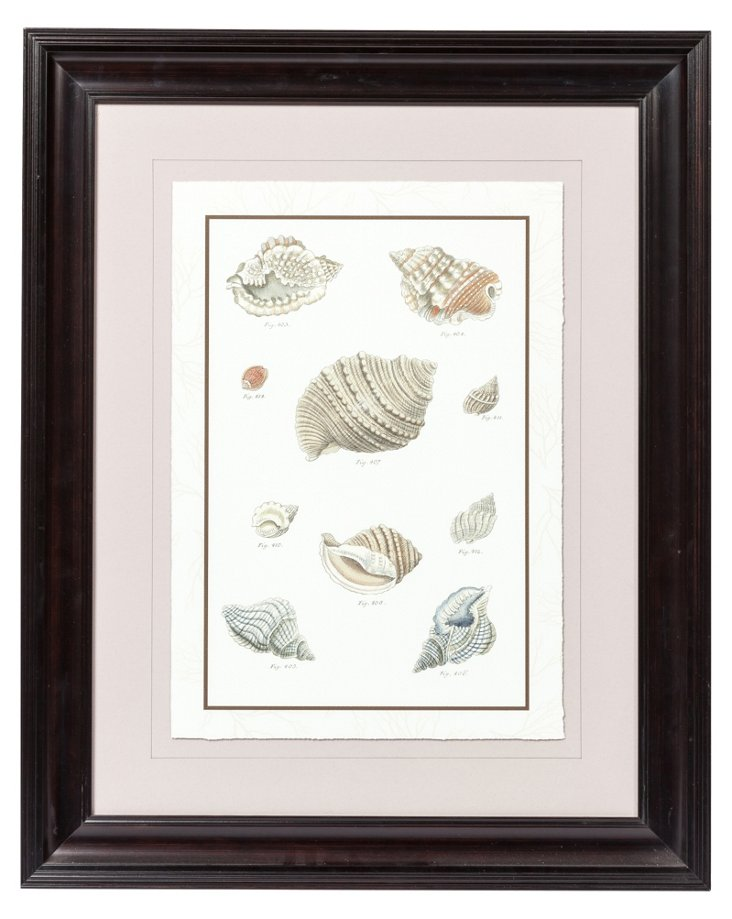 Seashell Print I
