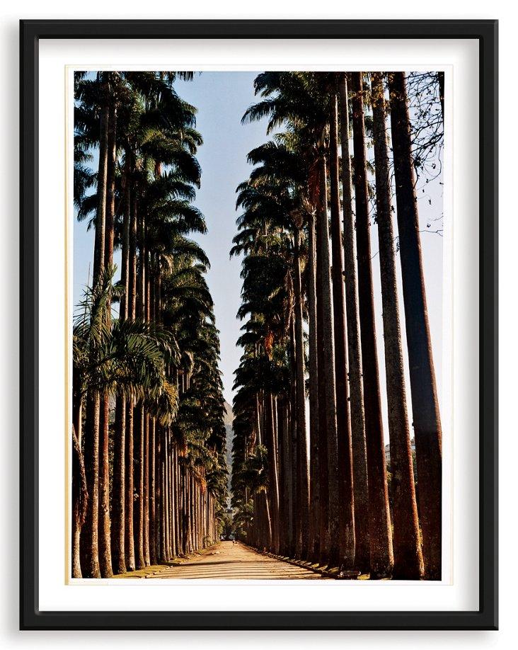 Botanical Garden Palms