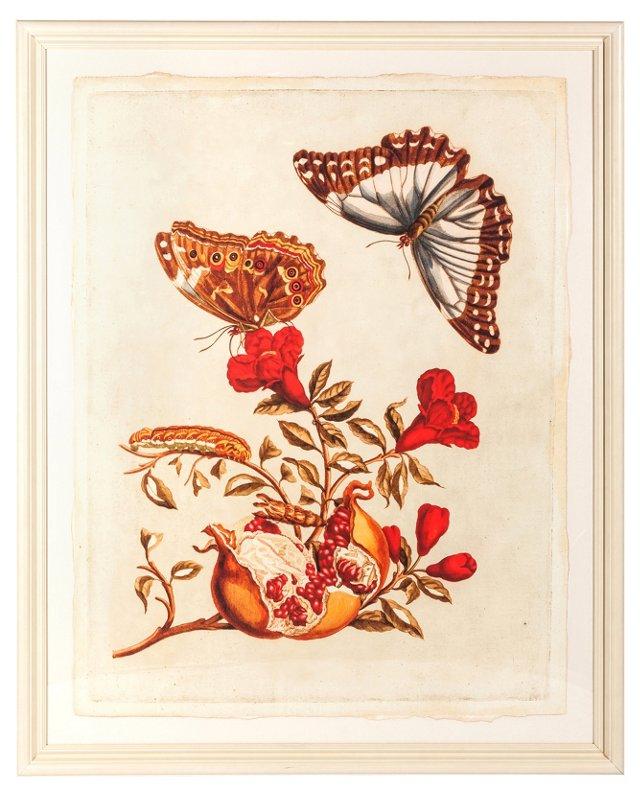 Merian Butterflies