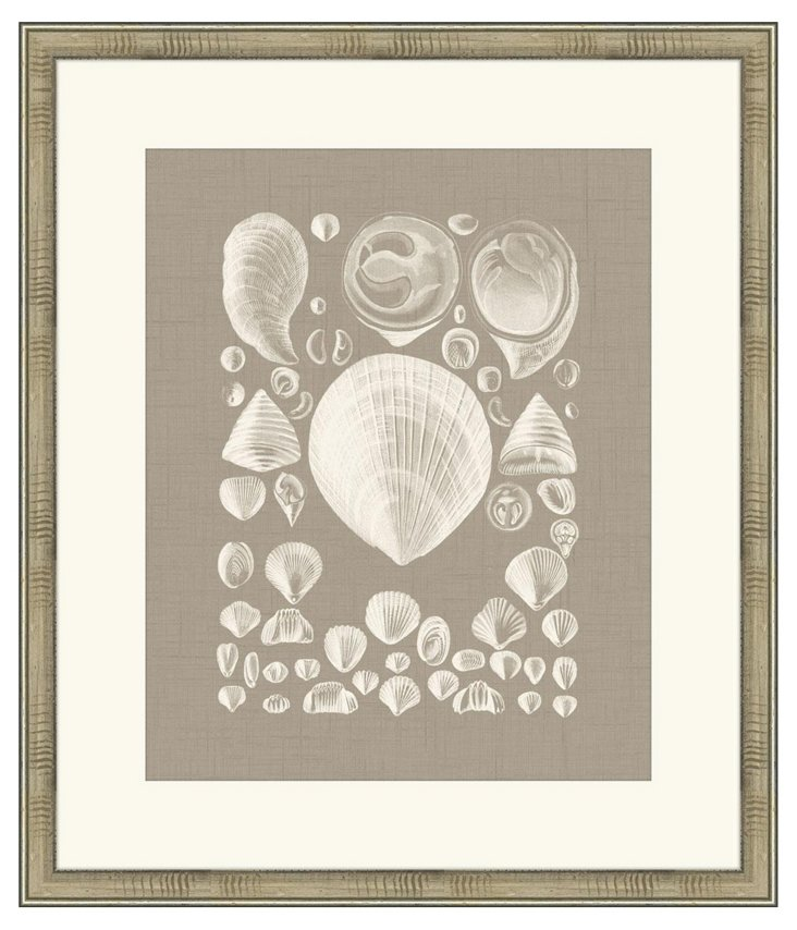 Colorful Shells in Taupe IV