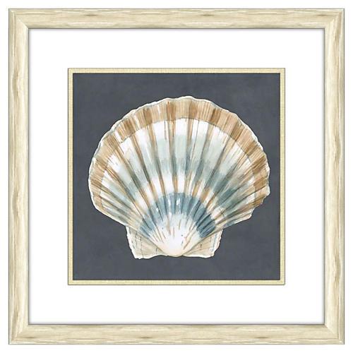 Shells on Slate III