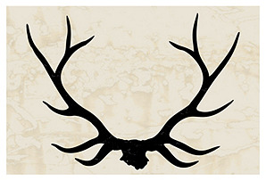 Stag Antlers I