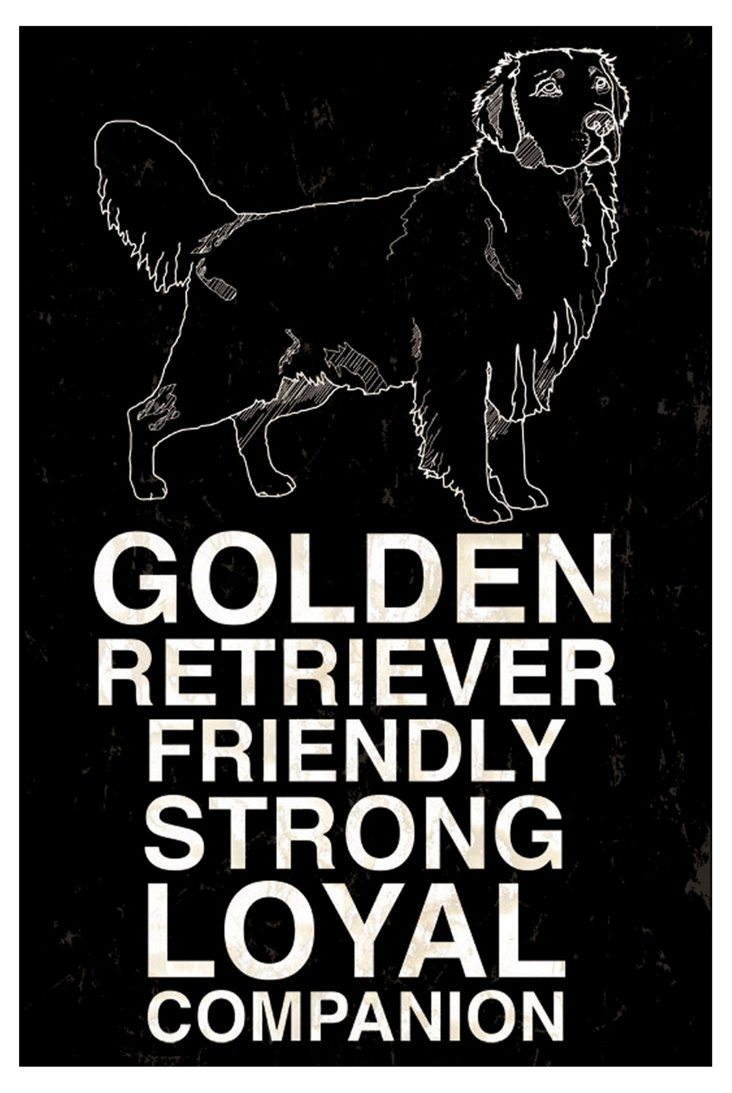 Golden Retriever, Black