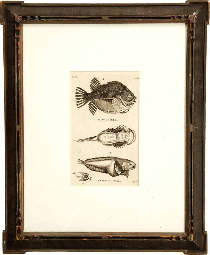 Framed Etching, Fish