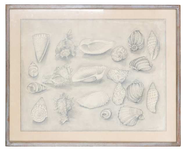 Framed Shell Pencil Drawing