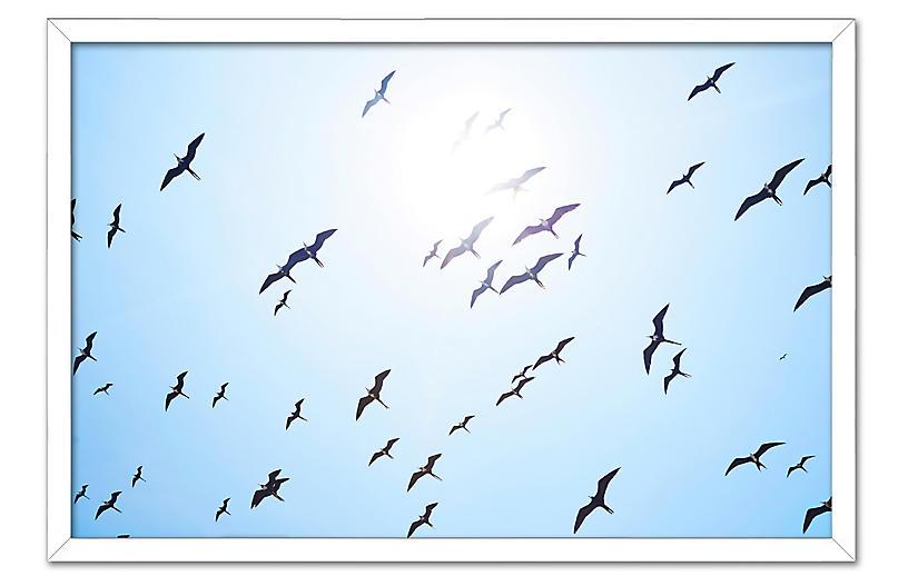 Pascal Shirley, Birds Over Panama