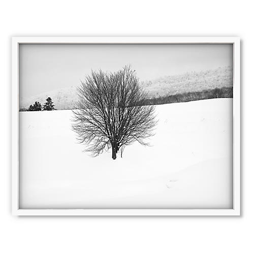 Pascal Shirley, Hokkaido Tree